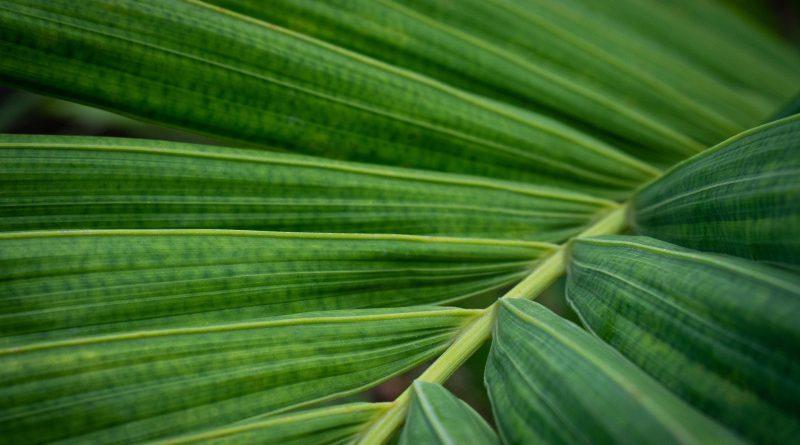 egzotyczne rośliny doniczkowe